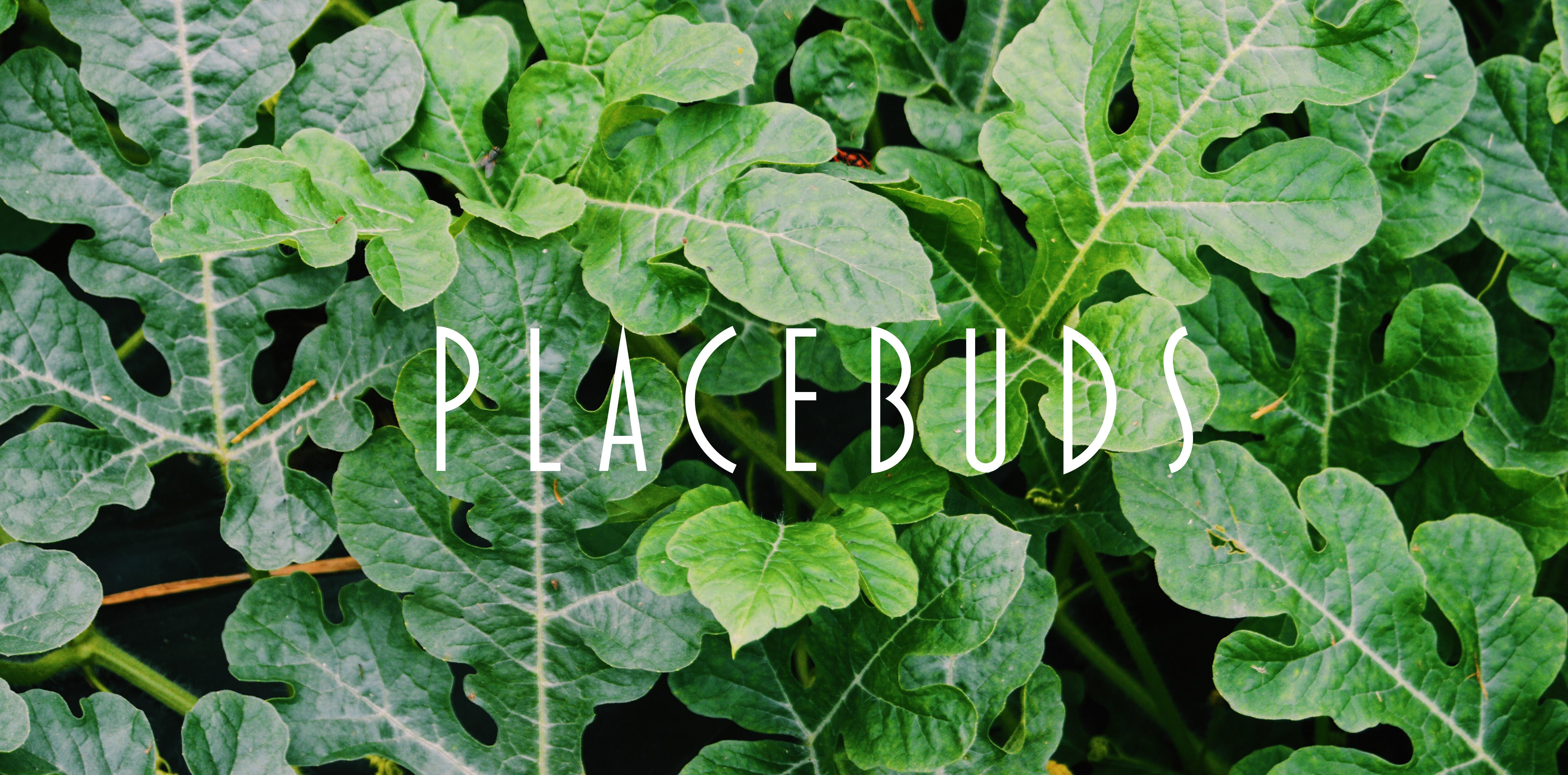 Placebuds