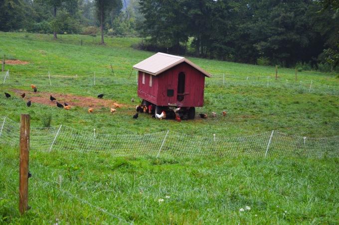 PA Bowen Chickens